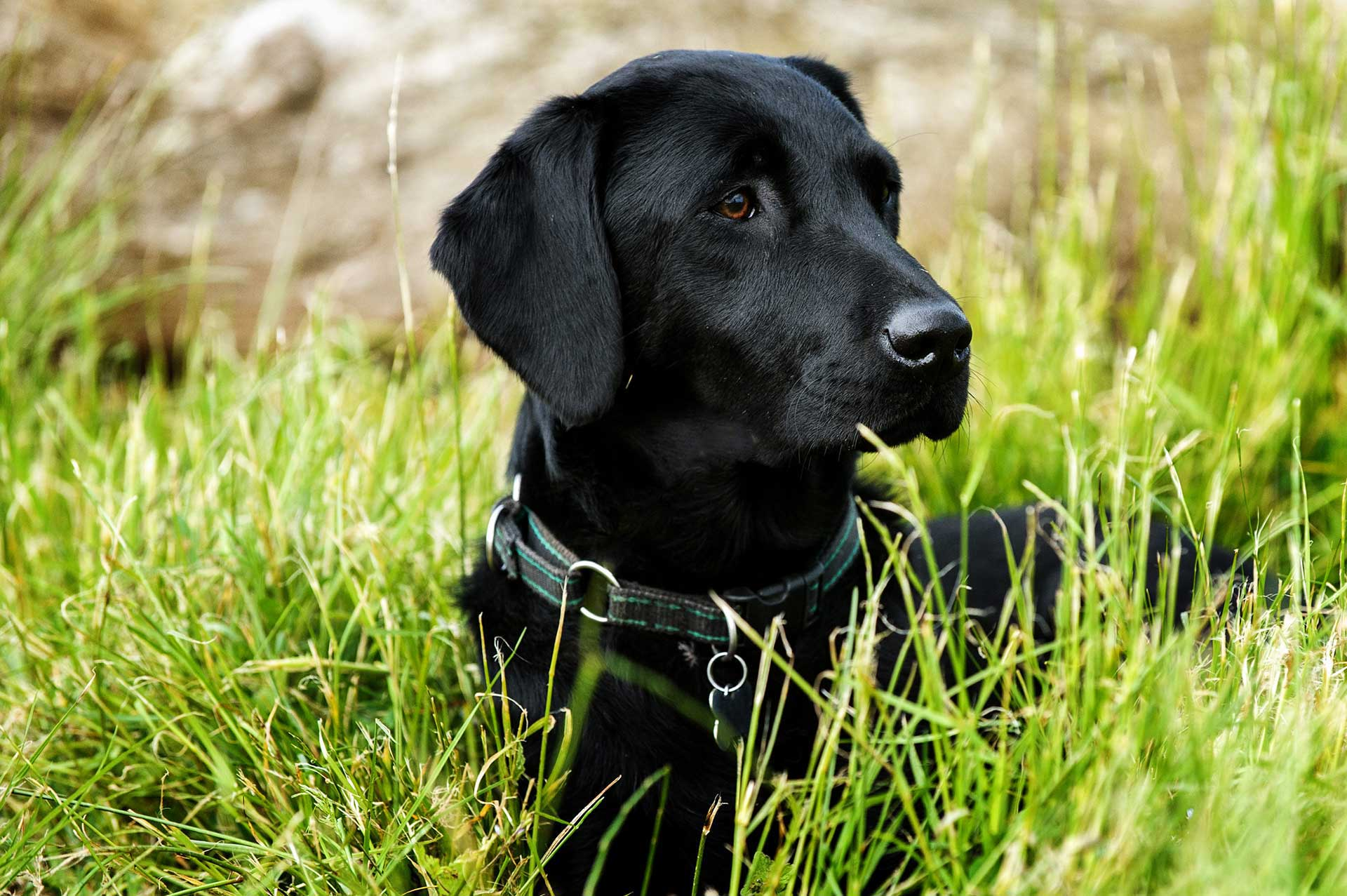 Scottishdogphotographer005