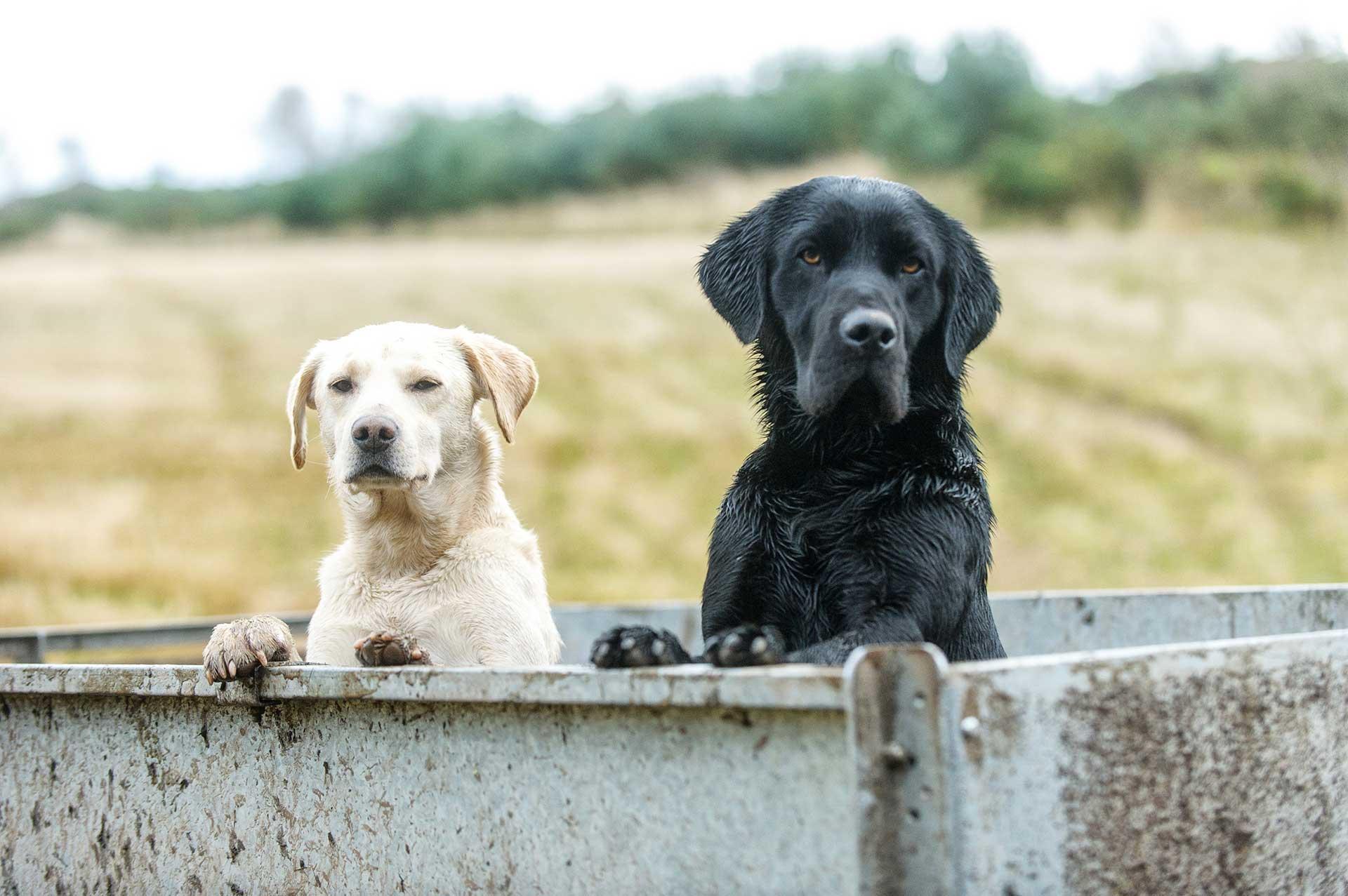 Scottishdogphotographer012