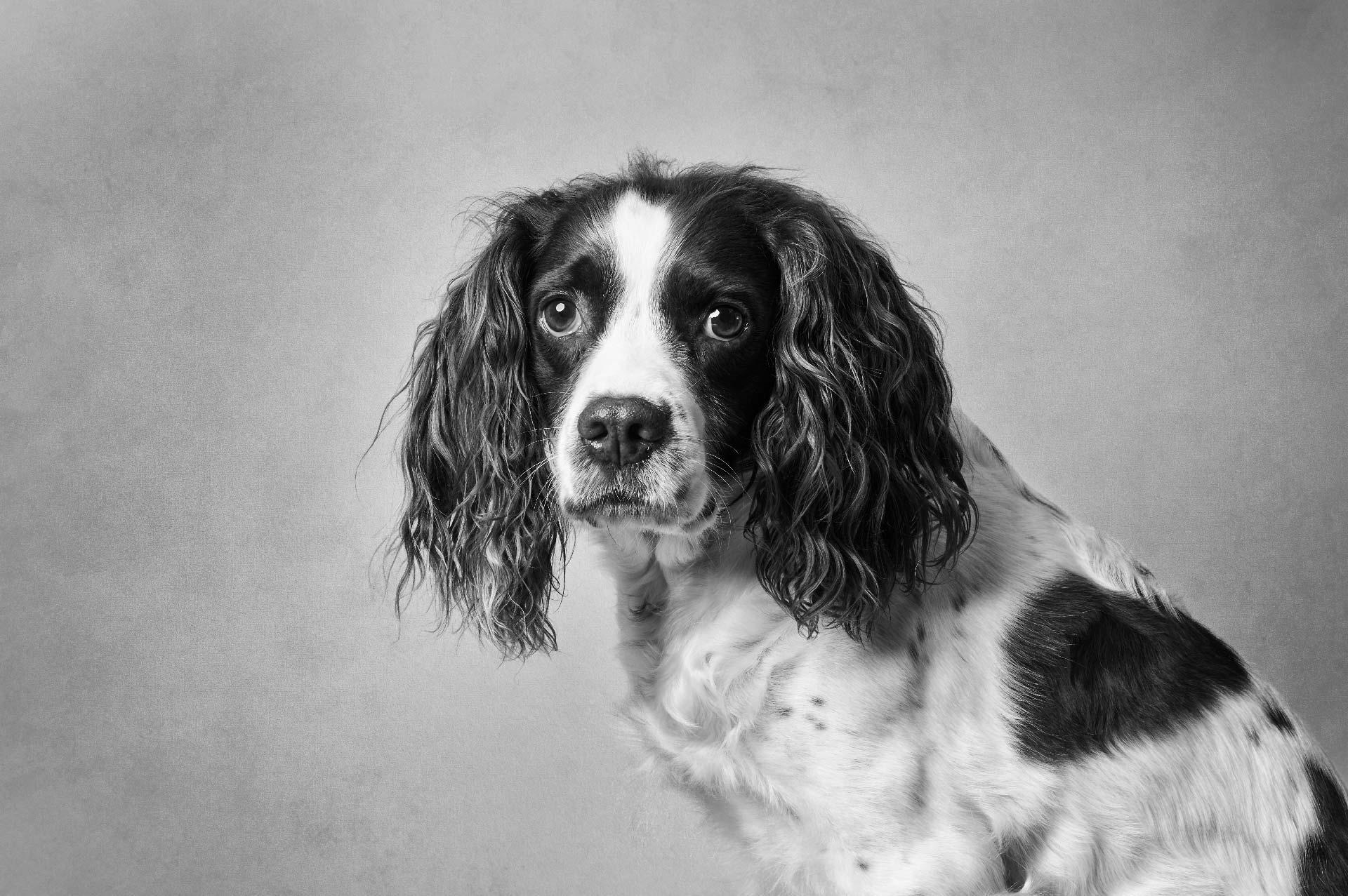 Scottishdogphotographer04