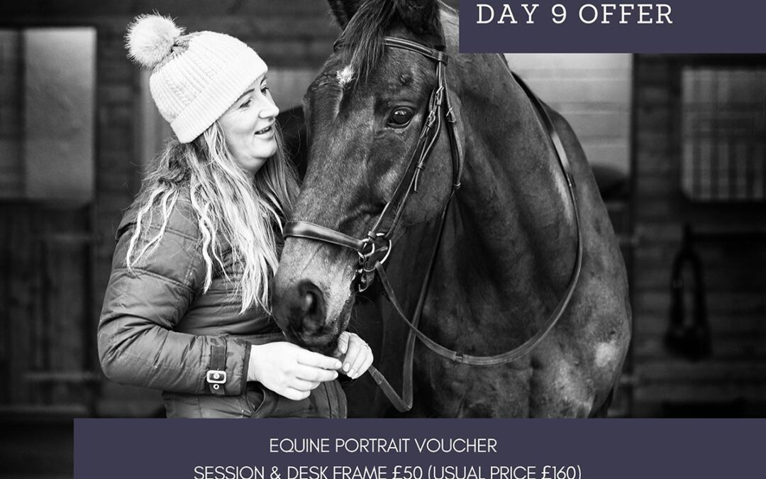 12 Days of Christmas – Day Nine – Equine portrait voucher