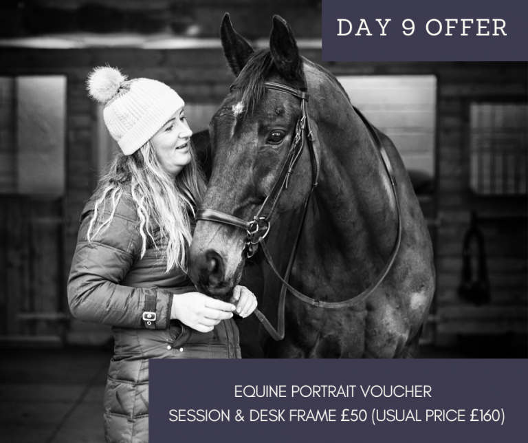 12 Days of Christmas – Day Nine – Equine portrait voucher
